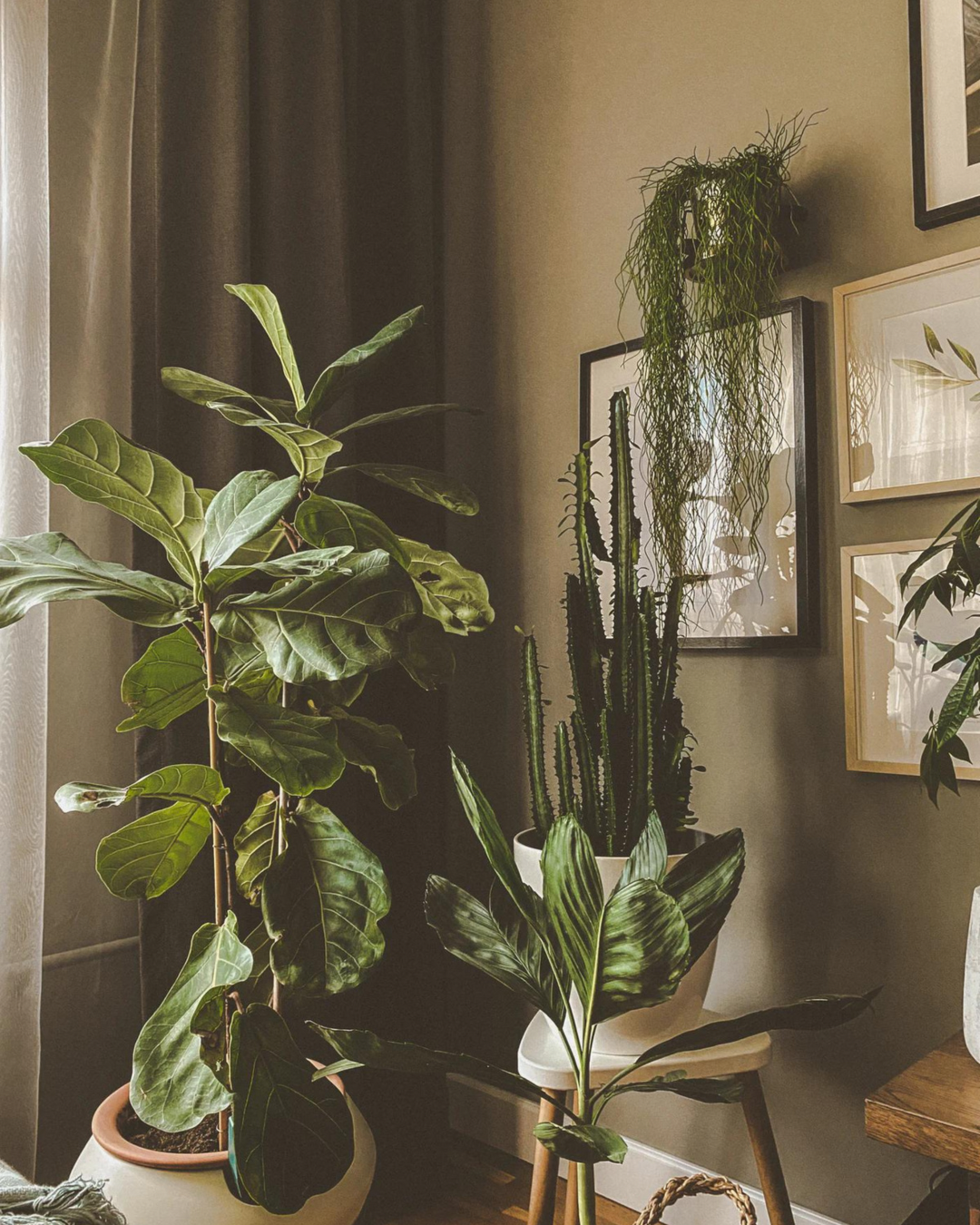 A cosy room dotted with different house plants