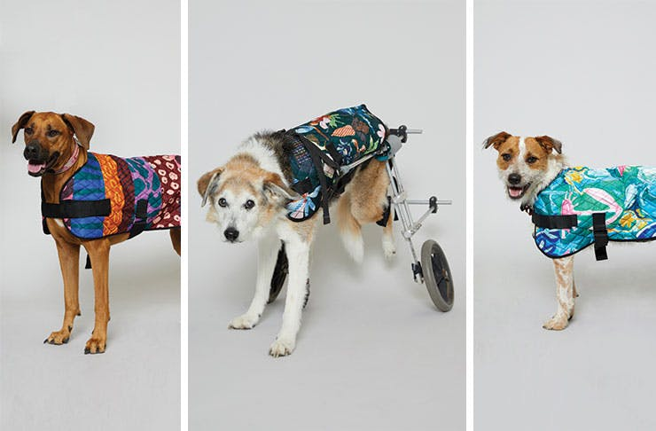 What You Need To Know About Gorman S New Range Of Dog