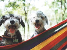 Pack Your Pup, Here Are The Best Dog-Friendly Camping Spots In WA