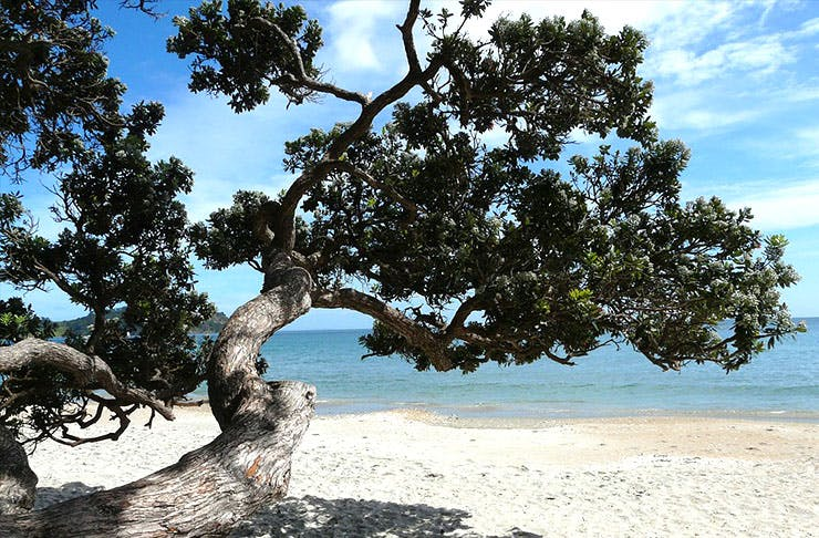 30 Truths About A New Zealand Summer