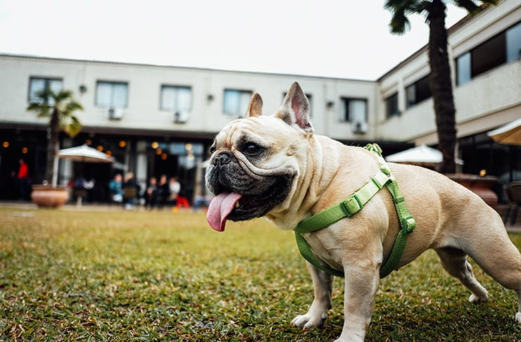 50 things to do with your dog in sydney sydney the urban list things to do with your dog sydney solutioingenieria Images