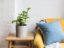 10 Indoor Plants You Need For 2018
