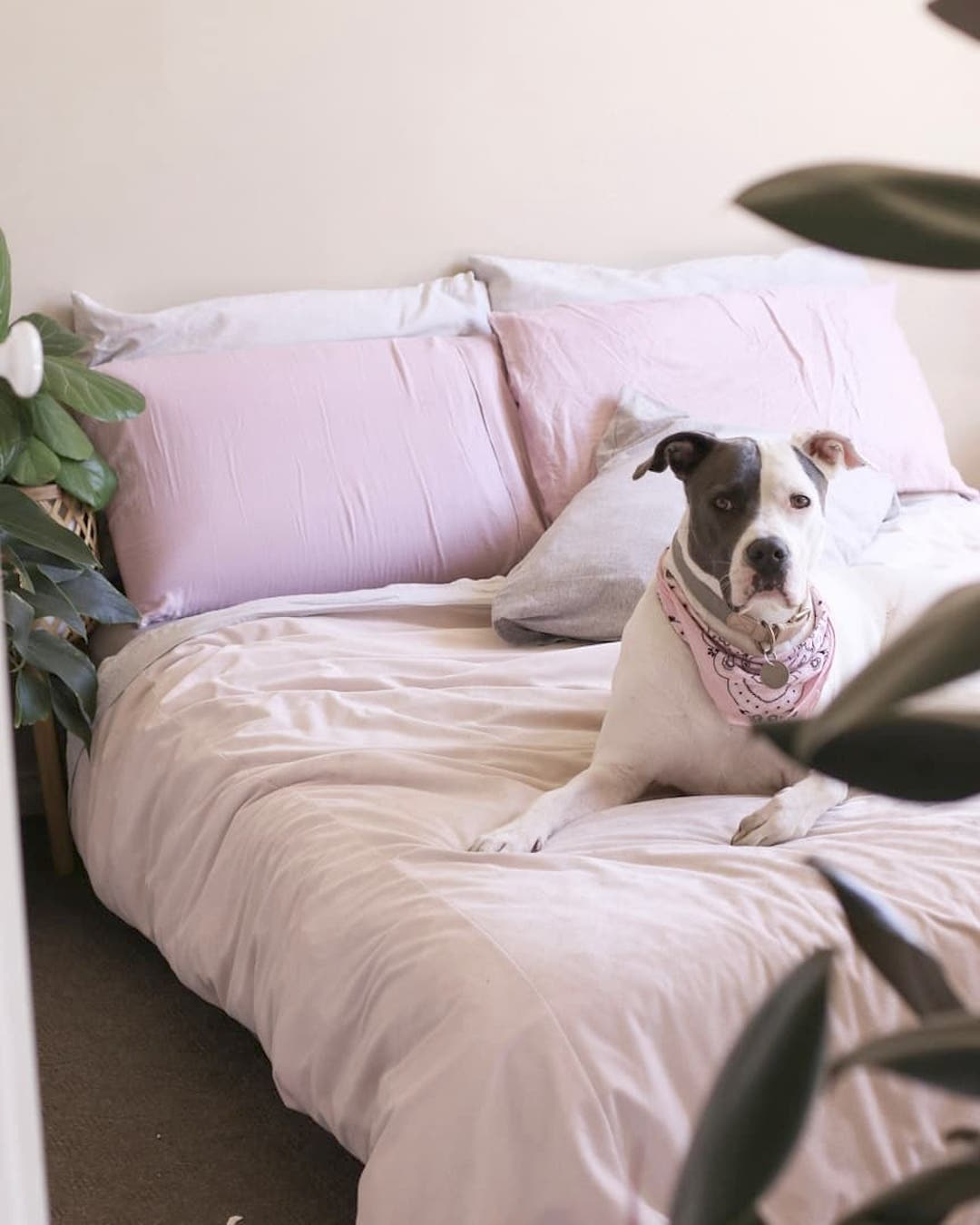 A dog lies on a plush pink bed.