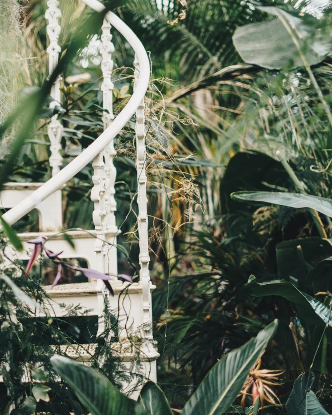 A white spiral staircase almost totally obscured by different plants