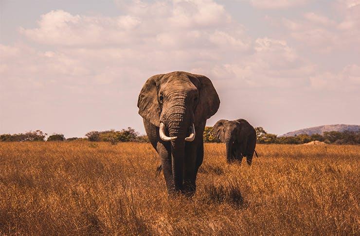 5 Big Reasons To Go On Safari