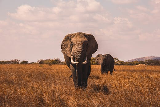 5 Big Reasons To Go On Safari