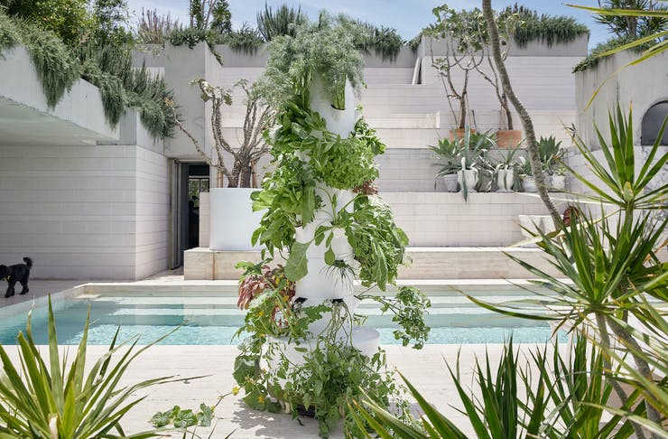 An airgarden vertical garden in a courtyard with a pool and potted plants
