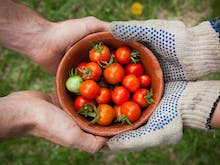 No Green Thumb Required, This Gardening Hack Makes Growing Food At Home Easy