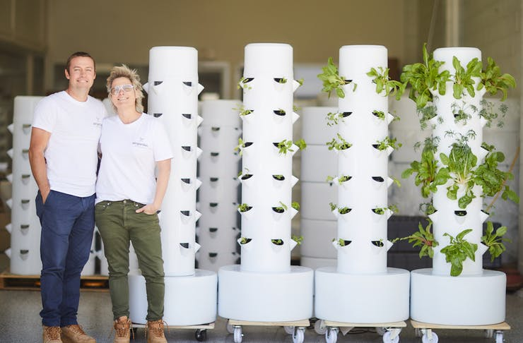 Sibling duo Tom and Prue stand in front of a sea of their vertical gardens.