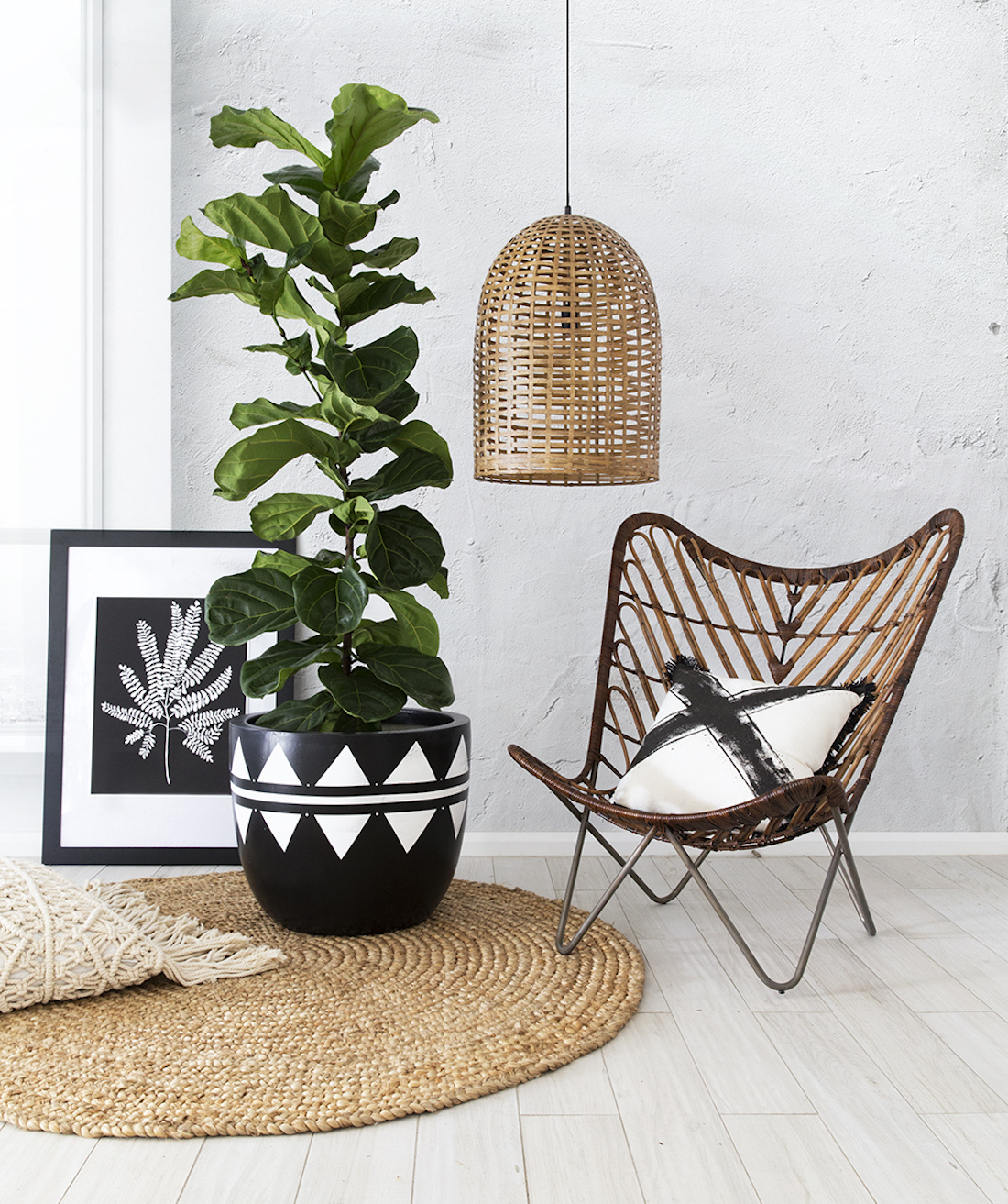 A large pot plant sits in a room surrounded by beachy decor.