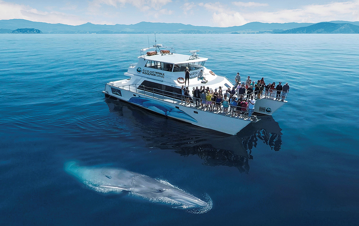An Auckland dolphin and whale safari boat with a whale just beside in the most blue ocean.