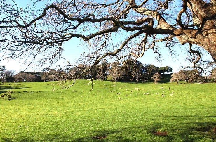 Auckland's Best Parks