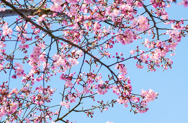 Auckland's Best Flower Walks
