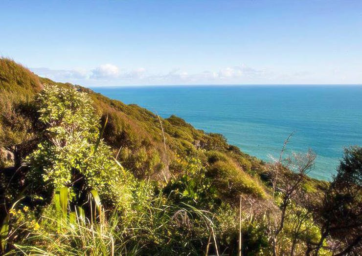 Auckland's Best Weekend Walks And Hikes