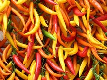Spice Up Your Life At This Hot Sauce Festival!