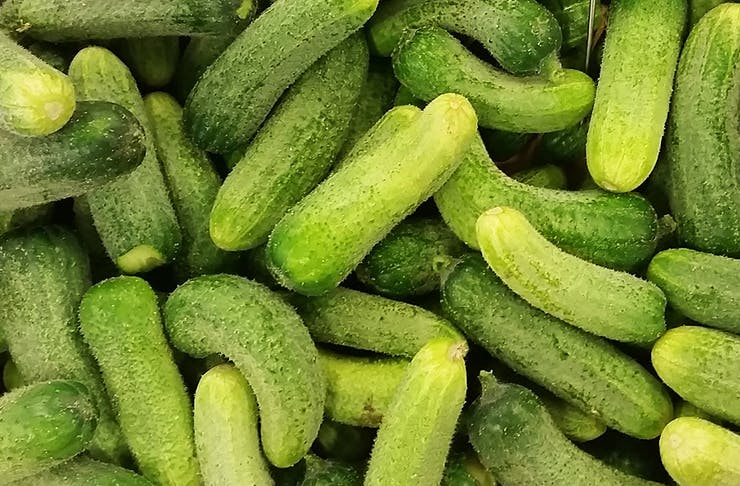 Auckland's Getting A Pickle Party!