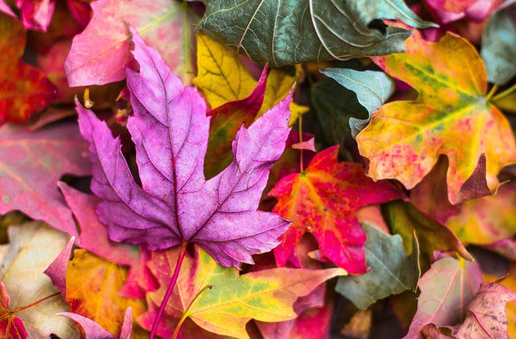 the best spots to see autumn leaves in and around auckland