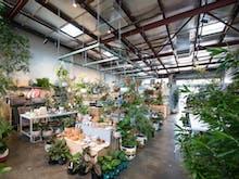 Bar Botanik