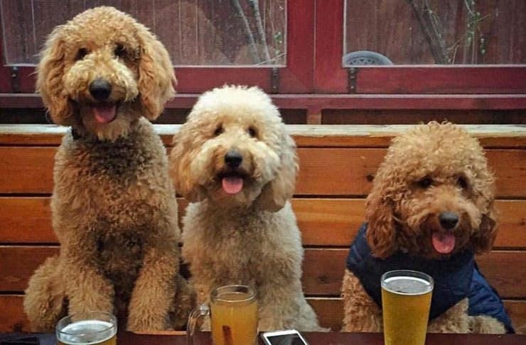 Dog cliques