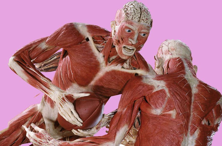 Dozens Of Human Corpses Are Coming To Auckland In Body Worlds Show!