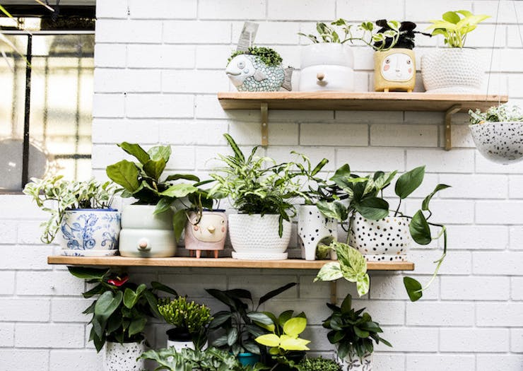 One Of Our Fave Plant Stores Is Popping Up In West Leederville Next Weekend
