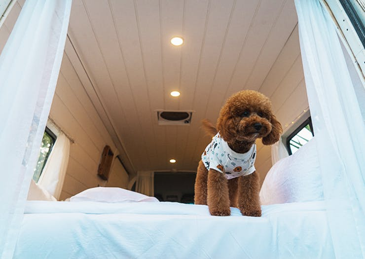 Here's How To Take Your Doggo On The Perfect Luxe Campervan Adventure