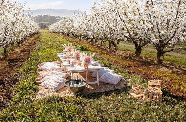 A picnic table in the middle of  cherry blossom trees