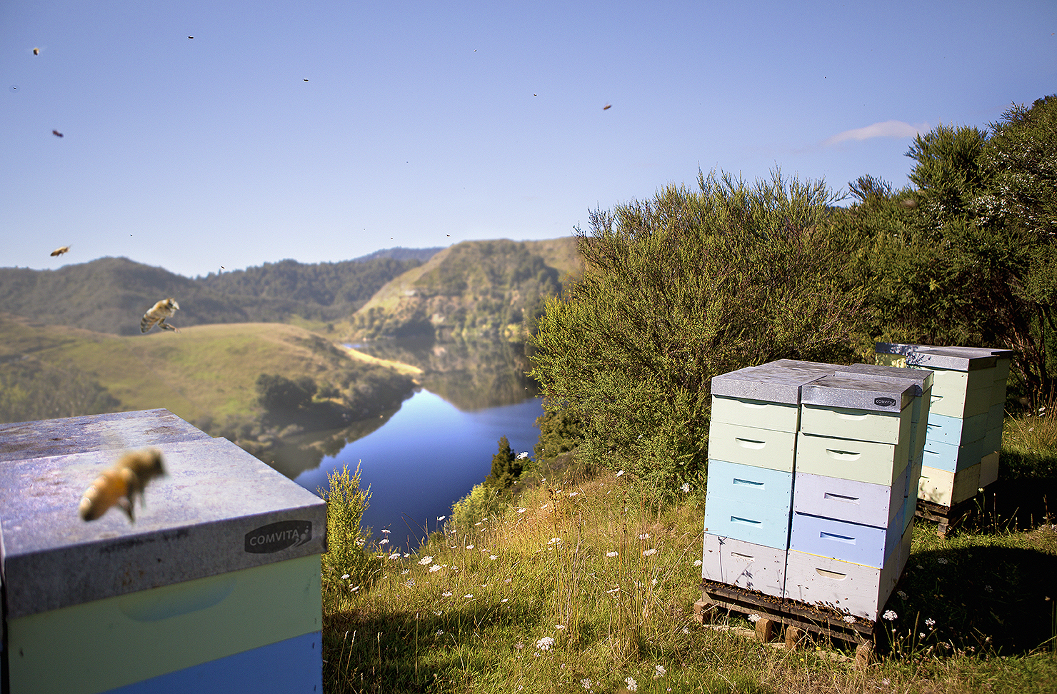A comvita bee hive in an impossibly beautiful outdoor locale.