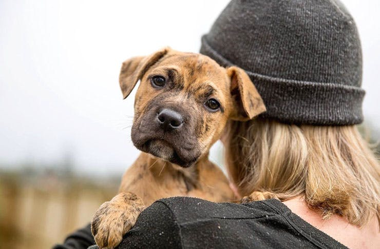 DC Rescue Are Hosting A Puppy Adoption Drive Tomorrow
