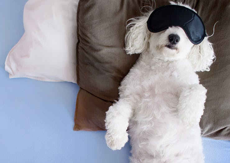 25 Signs You're Absolutely Not A Morning Person
