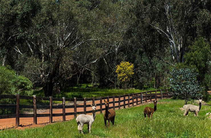 Deepdale Farm