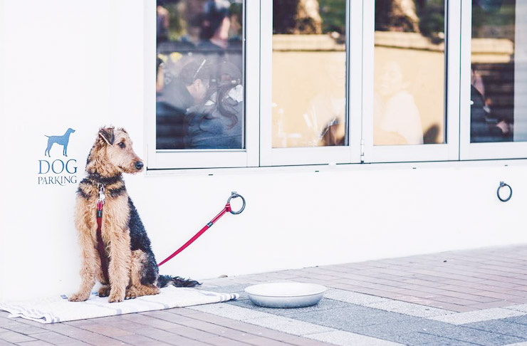 Dog-Friendly-Bars-in-Sydney