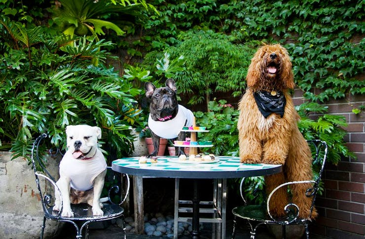 Woof! Auckland's Best Dog Friendly Cafes