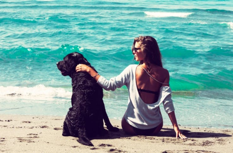 best dog friendly beaches on the gold coast
