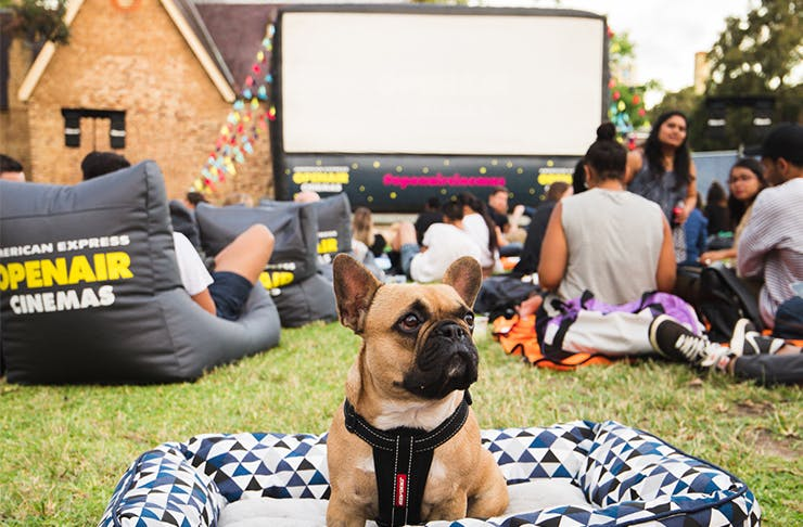 We've Found A Perth Cinema You Can Bring Your Dog To