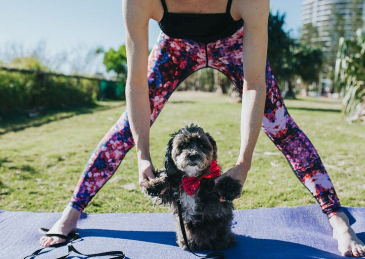 dog yoga is a thing