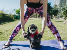Dog Yoga Exists And It's Coming To Auckland!
