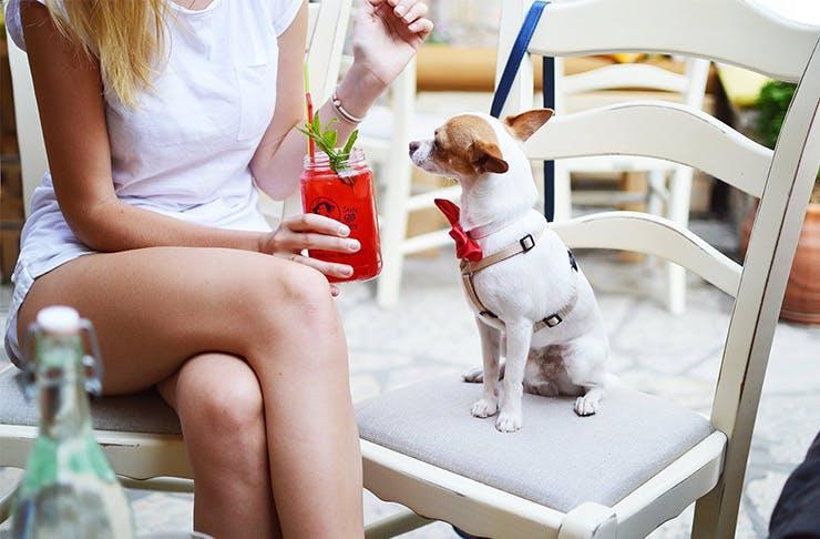 Doggy Spa Retreat Perth