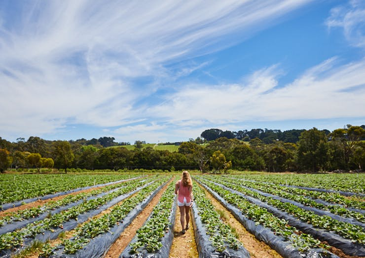 The Best Places To Pick Your Own Fruit Near Melbourne