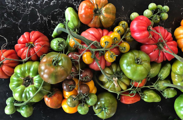 A variety of heirloom tomatoes in green, red, purple and orange