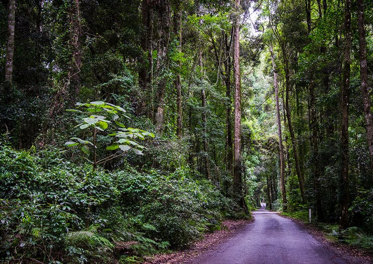 5 Magical Scenic Drives To Take From The Gold Coast