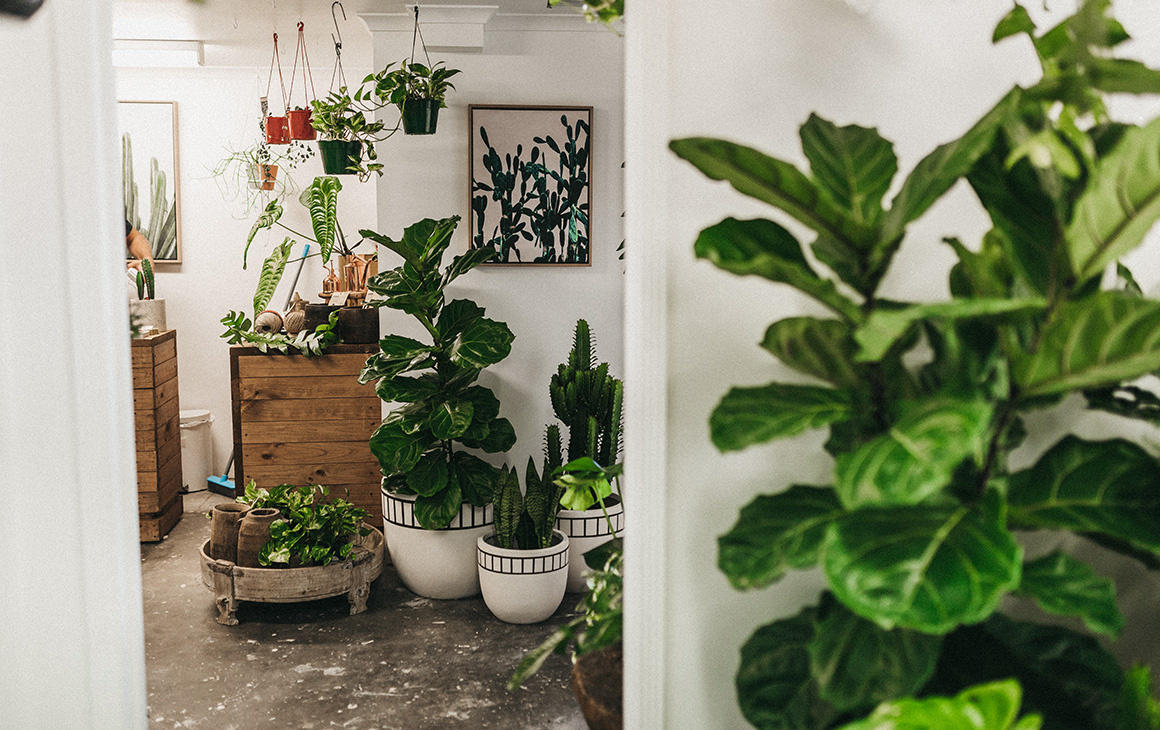 6 Of The Best Indoor Plant Shops On The Gold Coast Gold Coast