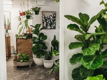 Say Hello To GreenFolk | Burleigh's Adorbs New Indoor Plant Store