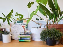 How To Be A Plant Mum When You Blew Your Paycheck On Food Again