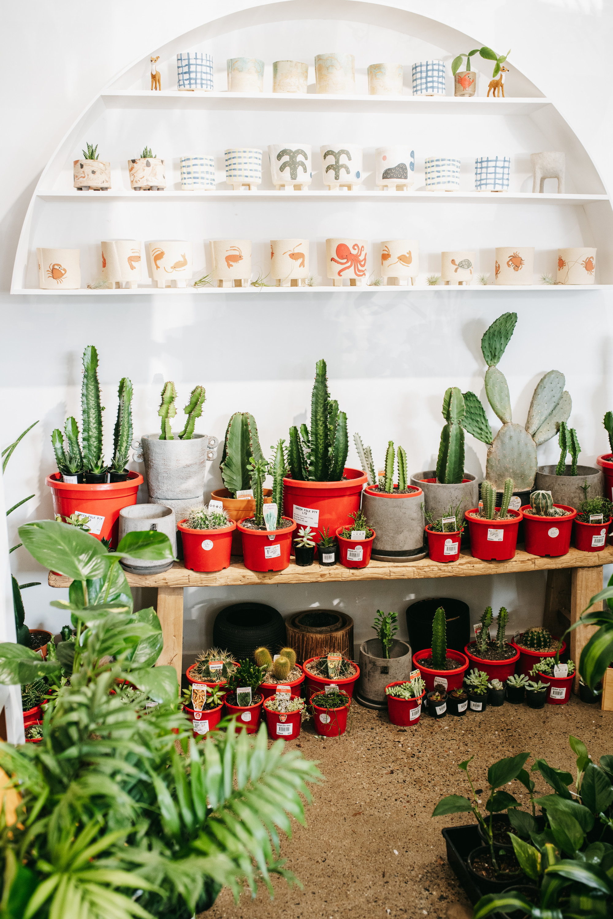 the interior of a nursery laden with cacti and pots