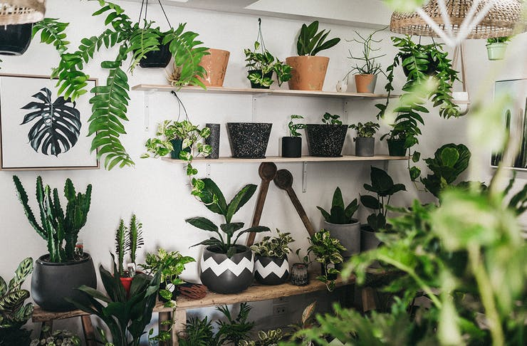 Green Folk Plant Shop Burleigh