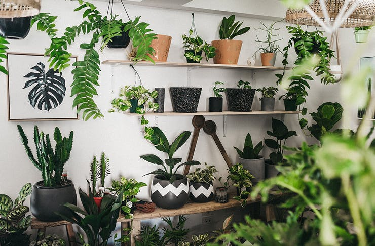 Green Folk Plant Shop Burleigh