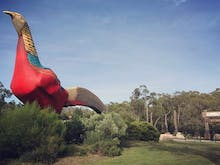 Here's Your Chance To Name Gumbuya World's Giant Golden Pheasant And Make History