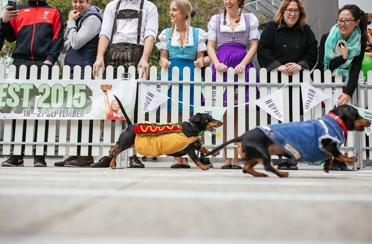 hophaus-sausage-dog-race