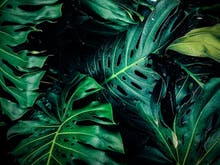 Everything You Need To Know To Keep Your Tropical Indoor Jungle Alive